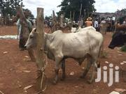 Animals | Other Animals for sale in Northern Region, Tamale Municipal