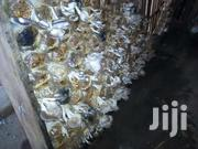 Mushroom And Mushroom Bags For Sale. | Landscaping & Gardening Services for sale in Brong Ahafo, Dormaa Municipal