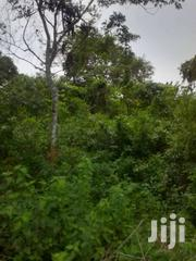 65 Acres Of Farmland At Osenase Asamankese | Land & Plots For Sale for sale in Eastern Region, East Akim Municipal