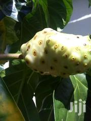 Organic Noni Fruits And Juice | Feeds, Supplements & Seeds for sale in Greater Accra, Dansoman