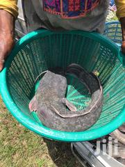 Catfish Available (Dry, Fresh) | Meals & Drinks for sale in Greater Accra, Adenta Municipal