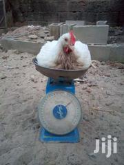 Broilers For Sale | Livestock & Poultry for sale in Eastern Region, New-Juaben Municipal