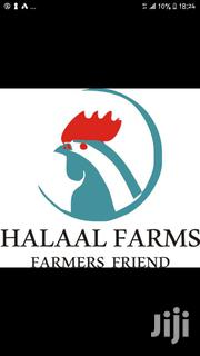 Day Old Chicks From Halaalfarms | Livestock & Poultry for sale in Central Region, Awutu-Senya