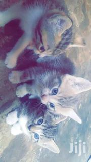 Female Cat Baby | Cats & Kittens for sale in Greater Accra, Adenta Municipal