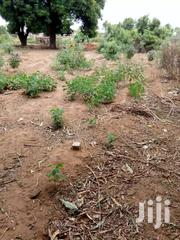 LAND FOR SALE HOT CAKE | Land & Plots For Sale for sale in Northern Region, Tamale Municipal
