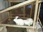 Selling The Whole Farm | Other Animals for sale in Greater Accra, Teshie-Nungua Estates