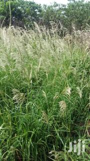 10acres Of Farm Land | Landscaping & Gardening Services for sale in Brong Ahafo, Sunyani Municipal
