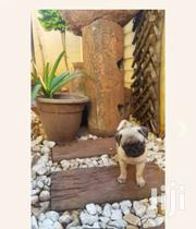 Female Pug Puppy For Sale At A Cool Price | Dogs & Puppies for sale in Greater Accra, East Legon (Okponglo)
