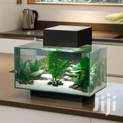 Bedroom Aquarium With Real Life Colourful Fishes | Fish for sale in Greater Accra, Achimota