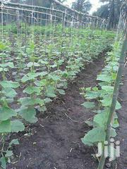 Organic Cucumber | Meals & Drinks for sale in Greater Accra, Roman Ridge