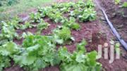 Salad For Sale | Feeds, Supplements & Seeds for sale in Greater Accra, Ga East Municipal