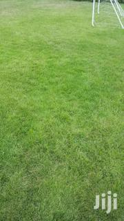 Long Carpet Grass For Sell | Garden for sale in Greater Accra, Cantonments