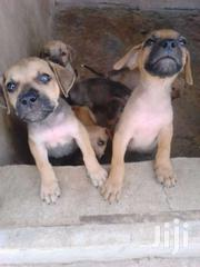 Looking For New Homes For My Puppies | Dogs & Puppies for sale in Ashanti, Kumasi Metropolitan