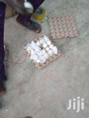 Turkey Fertile Eggs | Meals & Drinks for sale in Ashanti, Kumasi Metropolitan