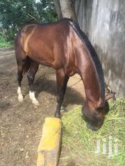 Male Nice Horse Going For Kul Price | Livestock & Poultry for sale in Greater Accra, South Labadi