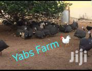 Yabs Farms | Other Animals for sale in Greater Accra, Ga West Municipal