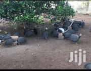 Guinea Fowl Sallah Promotion | Livestock & Poultry for sale in Greater Accra, Odorkor