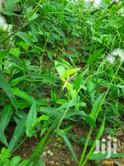 Farm Land For Sale | Landscaping & Gardening Services for sale in Western Region, Mpohor/Wassa East