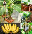 Fruits And Plants | Garden for sale in Kwahu West Municipal, Eastern Region, Nigeria