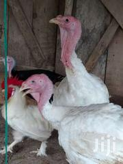 White Turkey For Sale | Livestock & Poultry for sale in Greater Accra, Osu