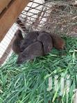 Good Breeding Grasscuter | Other Animals for sale in East Legon, Greater Accra, Nigeria