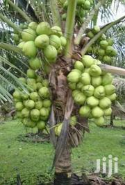 1,000 Acres Of Farmland For Sale | Landscaping & Gardening Services for sale in Brong Ahafo, Kintampo North Municipal