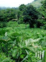 Farmland For Sale In Begoro | Land & Plots For Sale for sale in Eastern Region, Fanteakwa