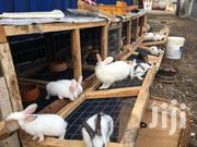 Rabbits | Livestock & Poultry for sale in Greater Accra, New Mamprobi