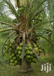 Invest In Coconut Farming! | Feeds, Supplements & Seeds for sale in Ashanti, Kumasi Metropolitan