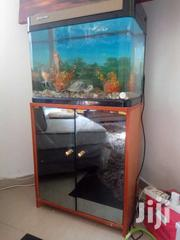 Aquarium | Fish for sale in Greater Accra, Nungua East