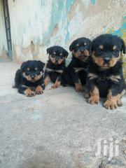 Pure Rottweiler Pups | Dogs & Puppies for sale in Greater Accra, Teshie-Nungua Estates