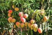 Mangoes Farms For Sale | Feeds, Supplements & Seeds for sale in Brong Ahafo, Kintampo North Municipal