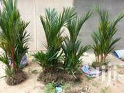 E Green | Garden for sale in Greater Accra, East Legon