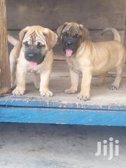 Bull Mastiff | Dogs & Puppies for sale in Greater Accra, Adenta Municipal